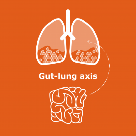 news-gut-lung-axis.png