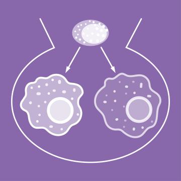 news-macrophage_polarization.png