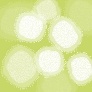 blog-corona-virus.png
